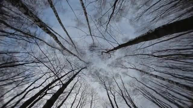 kracow_seasons_timelapse