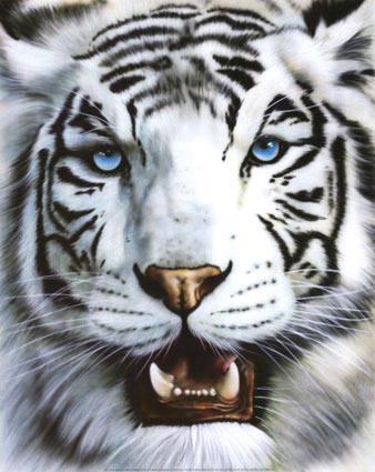 Tigre blanc 1 dominique borcy e nautia - Photo de tigre a imprimer ...